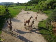Zoo Praha Afrika