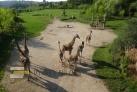 Údolí slonů a žirafy