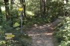 Rozcestí v lese