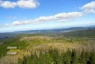 Přirozená obnova lesa